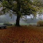 Au jardin de l'automne