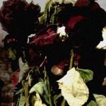 Les roses flétries