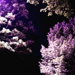 Sur les feuilles des arbres