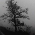 Une pluie de novembre